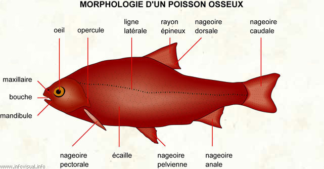 la biologie animale
